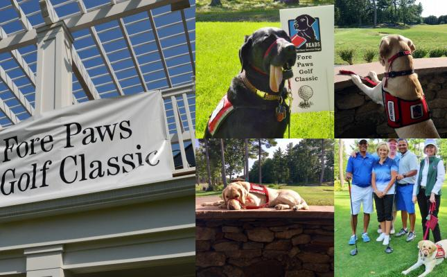 Fore Paws Collage