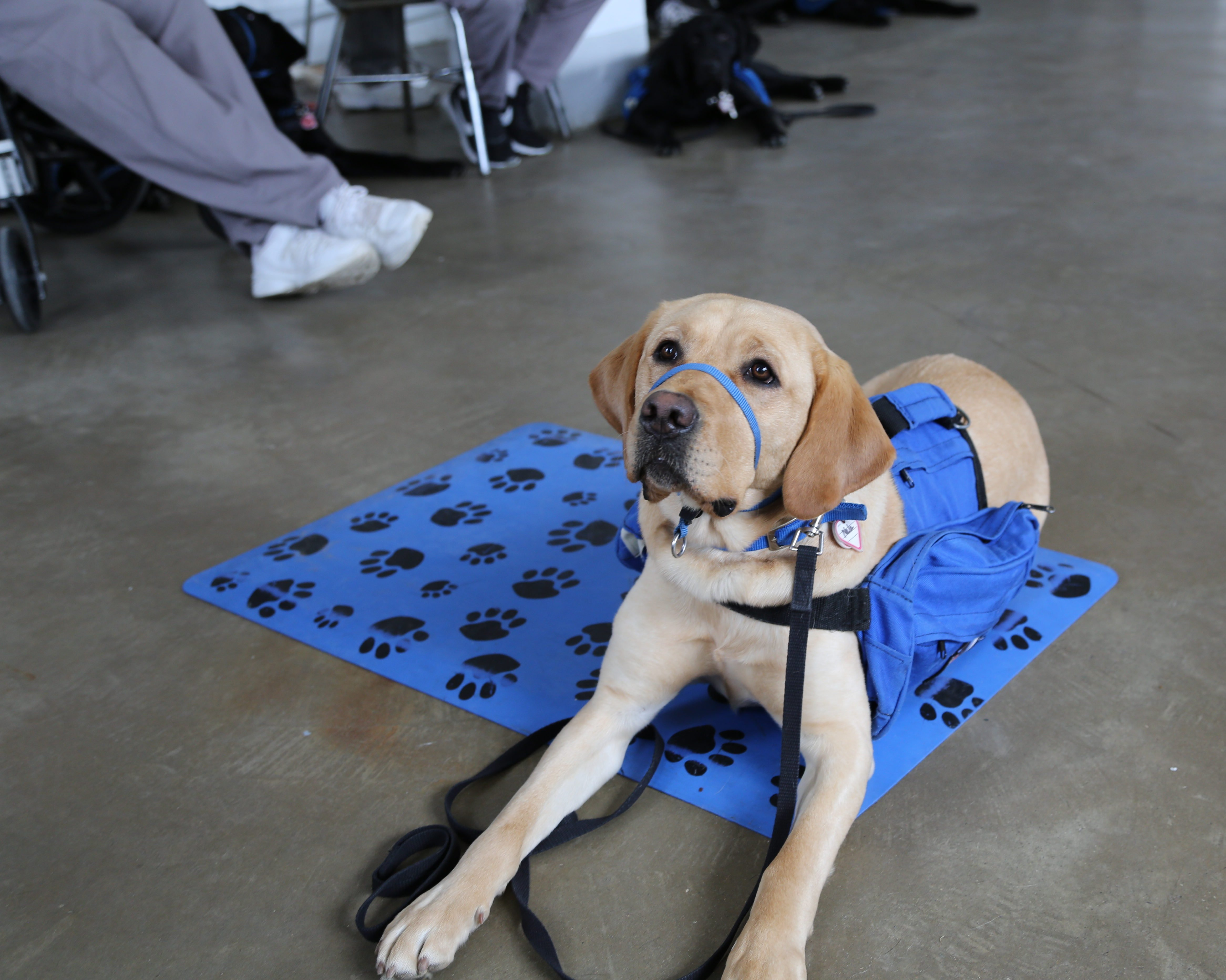 Year of the NEADS Dog Month 7 - Advances in Training in ...