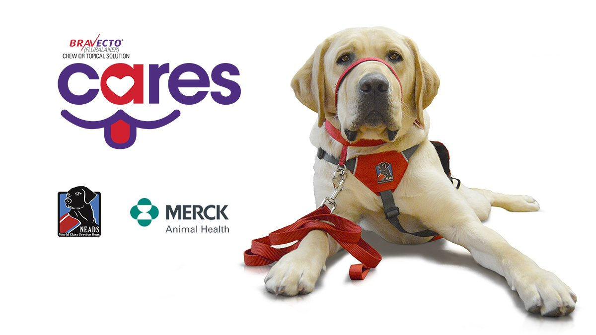 Home | NEADS World Class Service Dogs