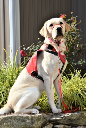 <b>Service Dog Sandy</b></br> WPR- Tim and Cathy Mast