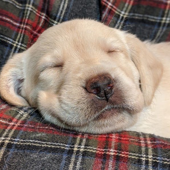 Frannie-pup