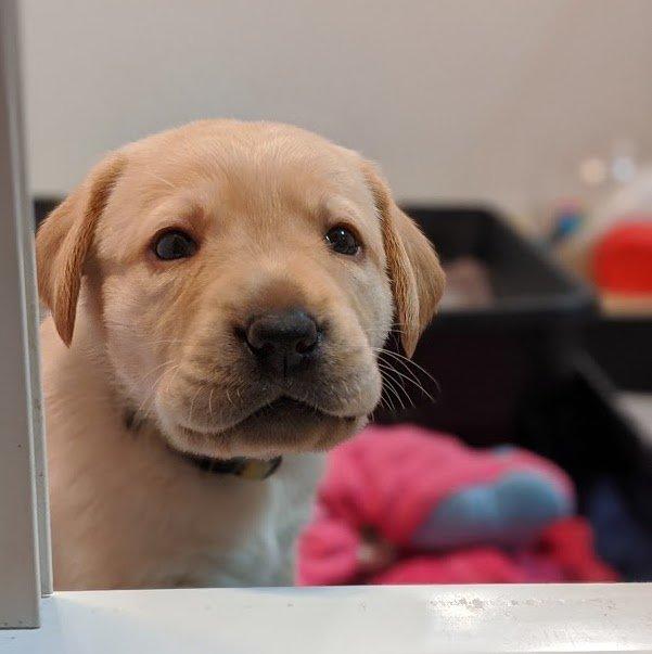frannie-pup1