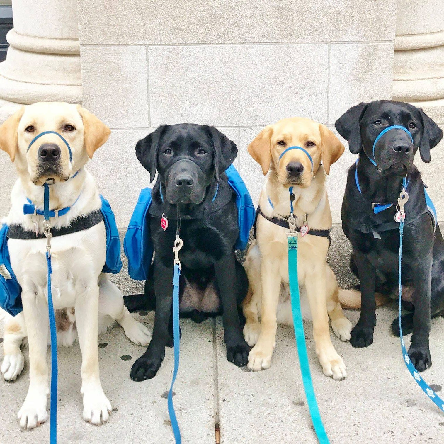 dogs in training