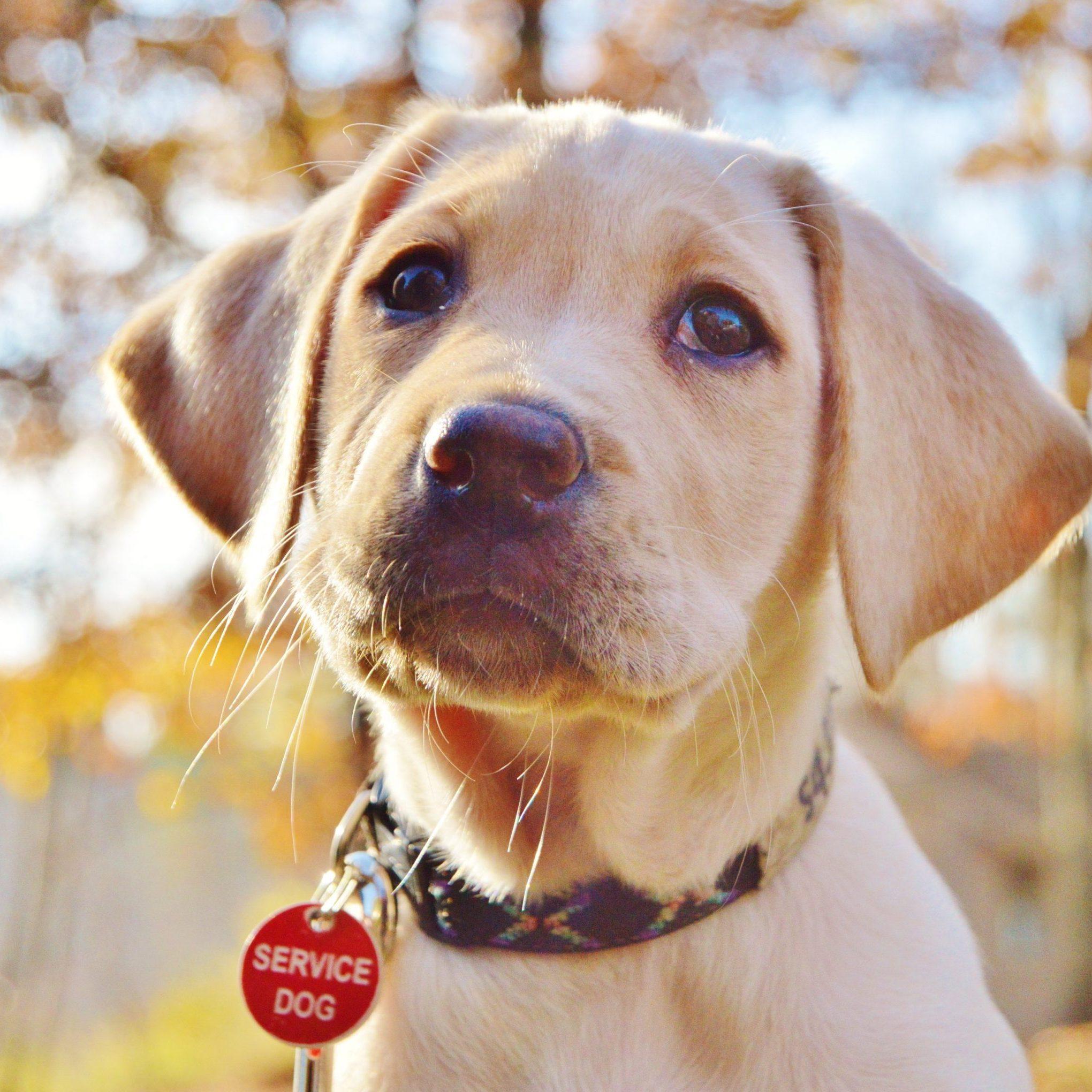puppy-sq